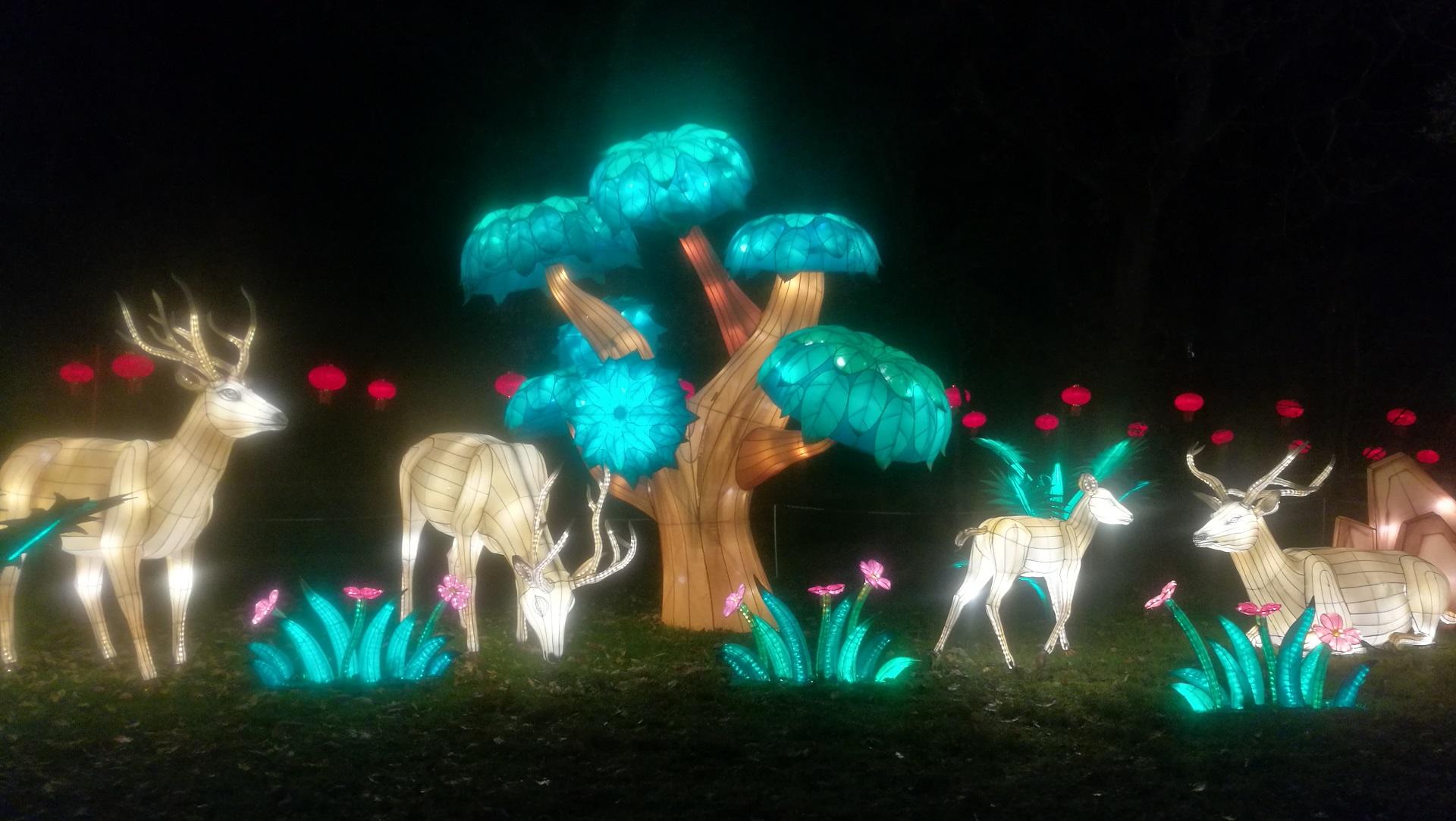 Nature Féérie de Chine au Festival des lanternes de Gaillac